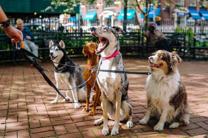 Cestování se psem je záživné, v tomto případě hned se čtyřmi.