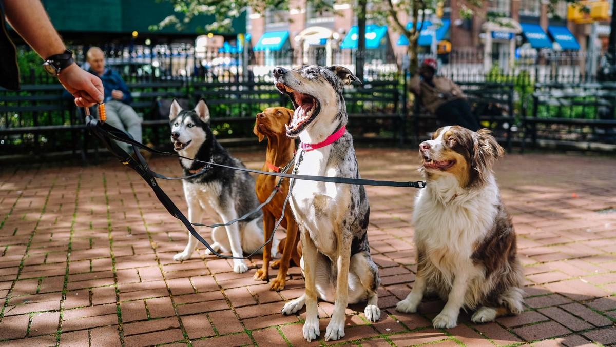 Cestování se psem má určitá pravidla