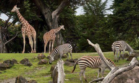 Africký výběr zoologické zahrady plný zvířat.