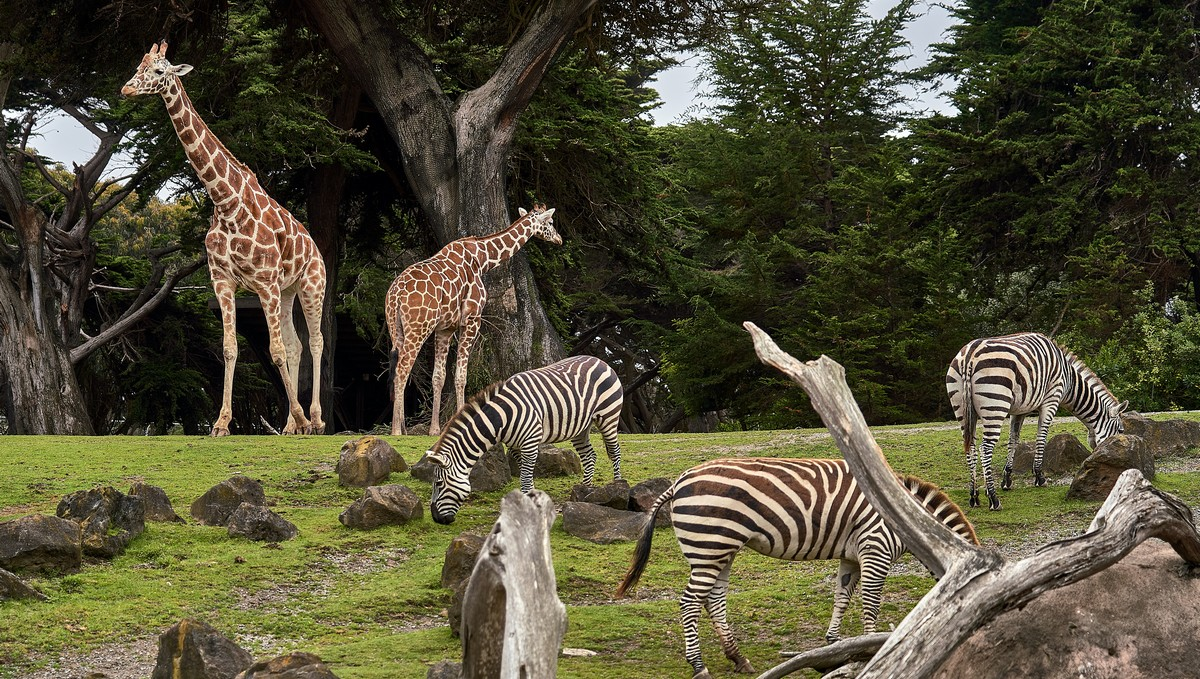 Zoologické zahrady, které můžete v Česku navštívit